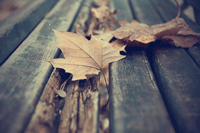 Finding ways to maintain recovery and mental health during seasonal changes